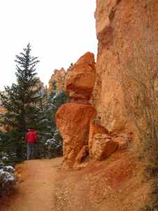 Walking on the Navajo Trail, the orange rocks were glowing.