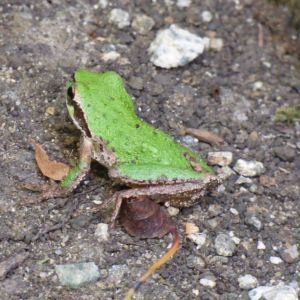 A frog sitting outside my house