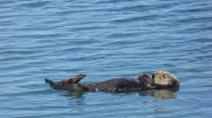 On a good day, we went to a state park to look at sea otters, then sit on the beach and relax for an hour.